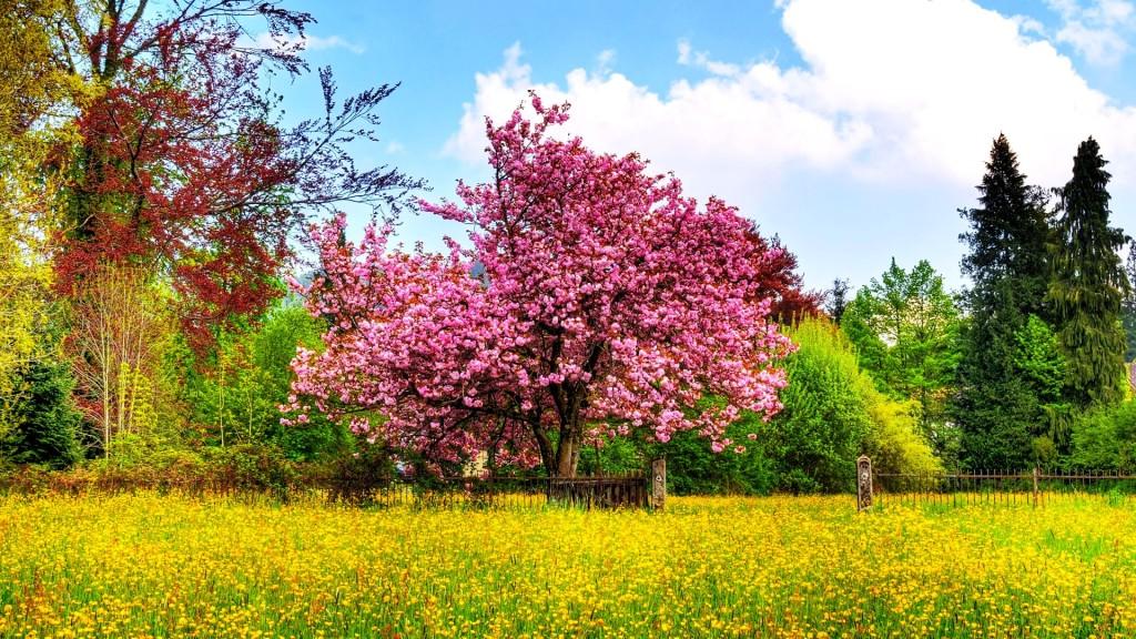 Free Desktop Backgrounds For Spring Season
