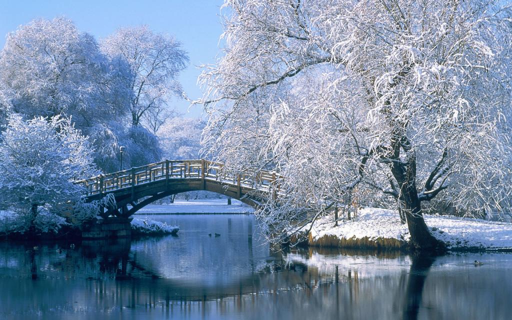 high definition winter frozen trees winter wallpapers
