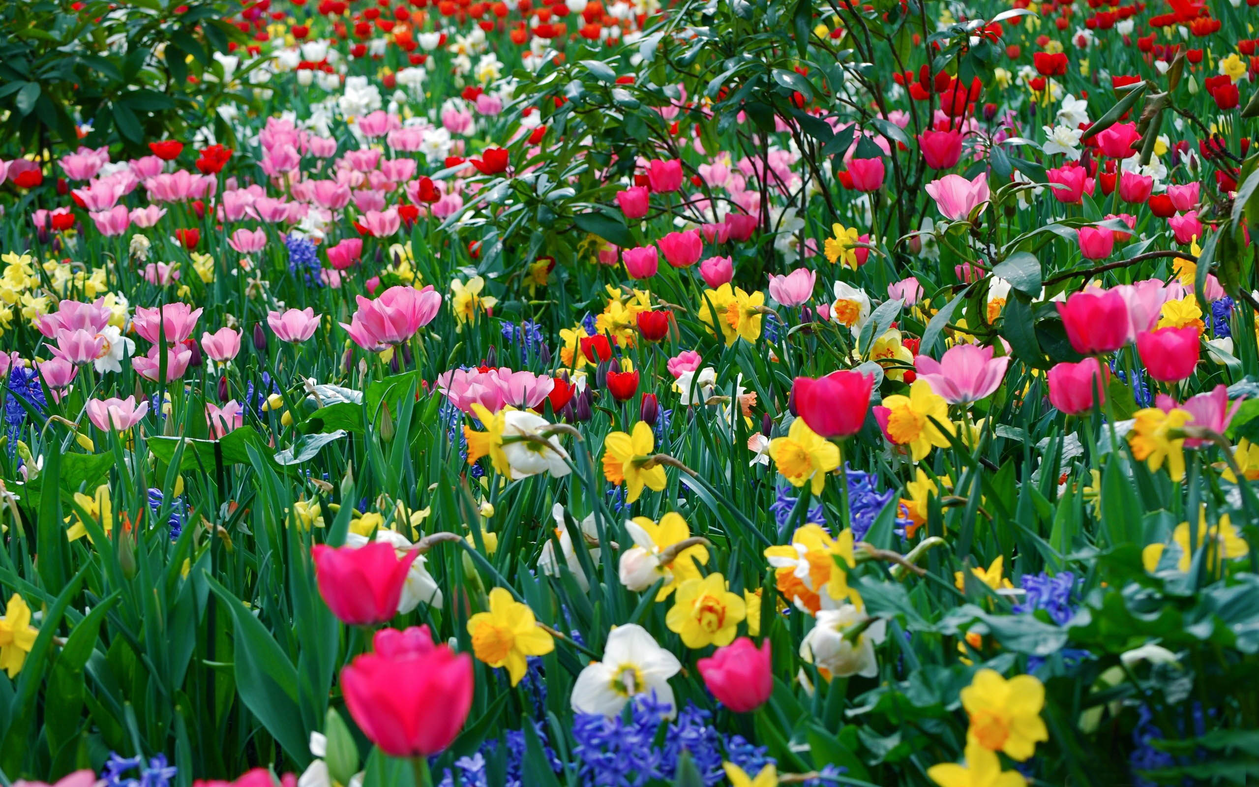 Free Country Spring Wallpaper