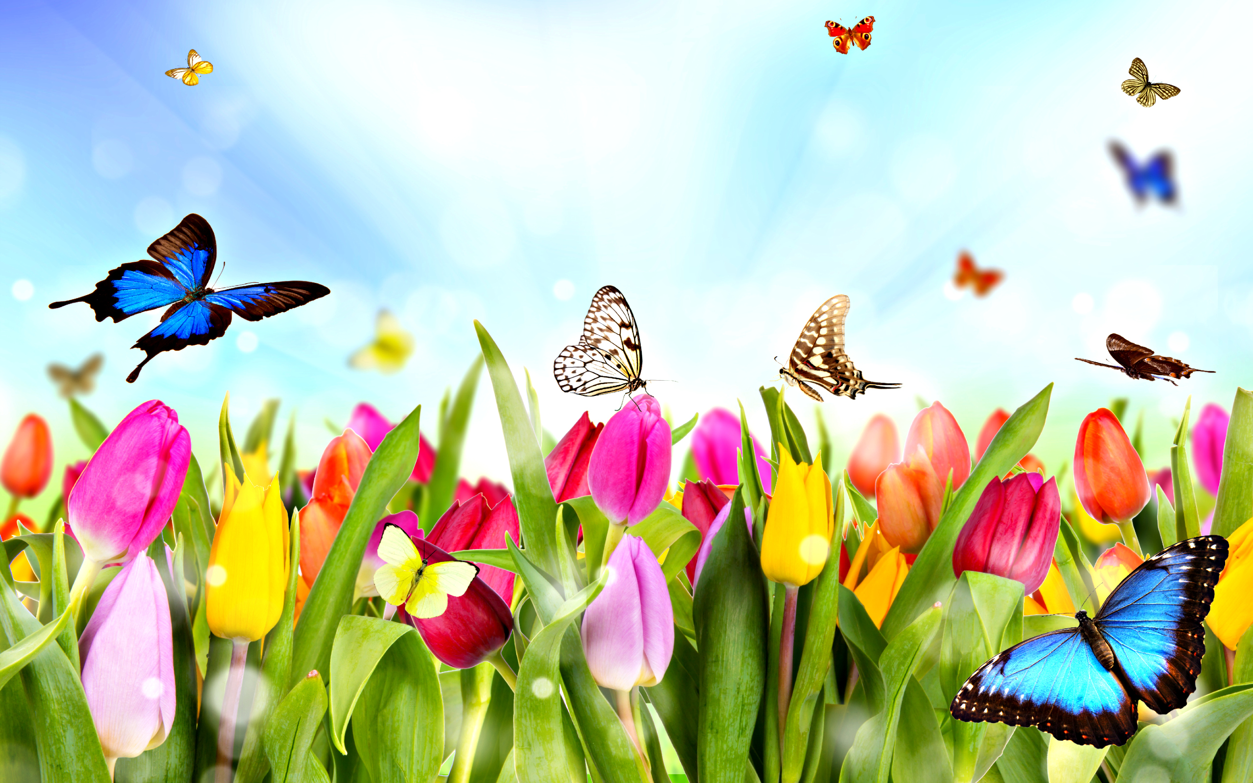 Spring Flowers And Butterfly Spring Pictures Truly Hand Picked