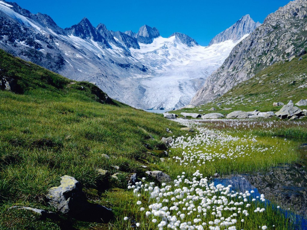 Snow mountain and flowers Switzerland landscape