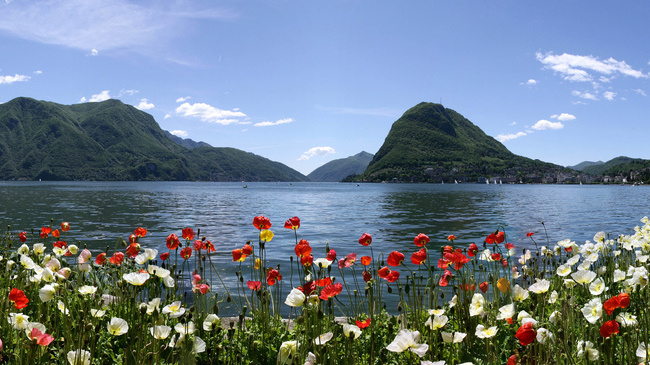 Flowers And Mountains Switzerland Tourist Attractions