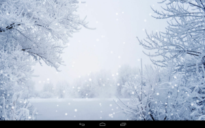 Snow fall and frozen branches of trees winter wallpapers