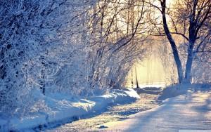Winter Wallpaper everything is frozen