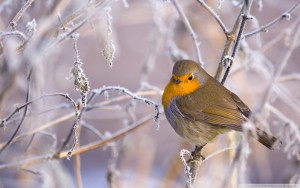 Bird waiting for spring winter wallpapers