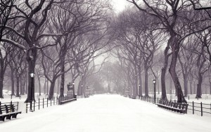 Snow pathway winter wallpapers