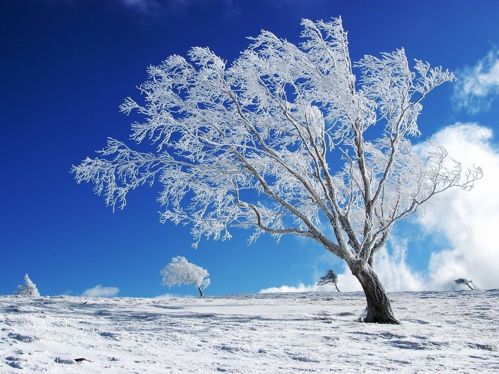 Standing alone in snow wide winter wallpapers