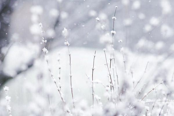 winter wonderland Snow white winter wallpapers