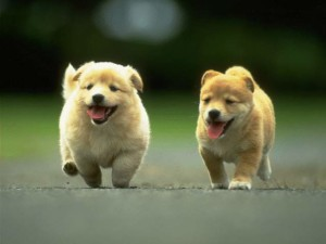 lets go for a walk cute puppies pictures