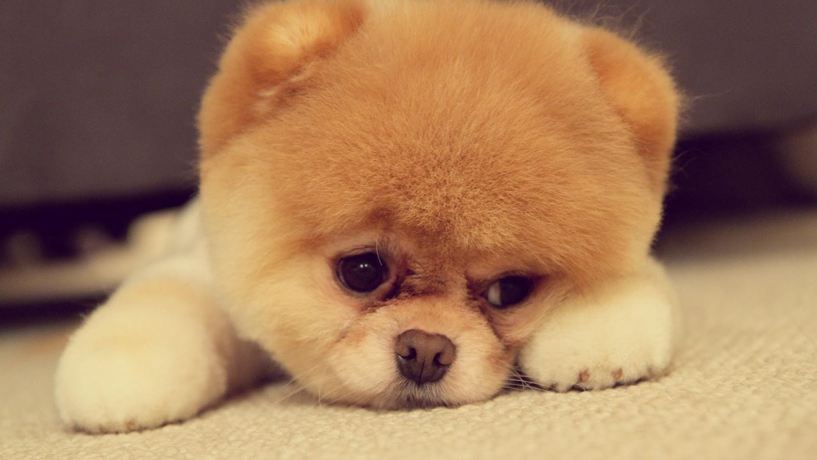 Am not sad its the light cute puppies pictures
