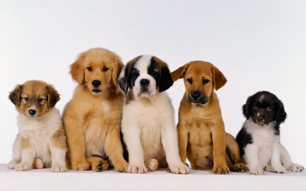 5 Cute puppies pictures