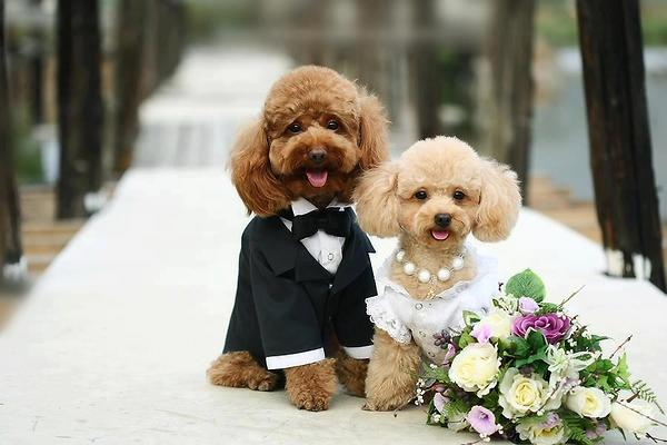 Just got married cute puppies pictures