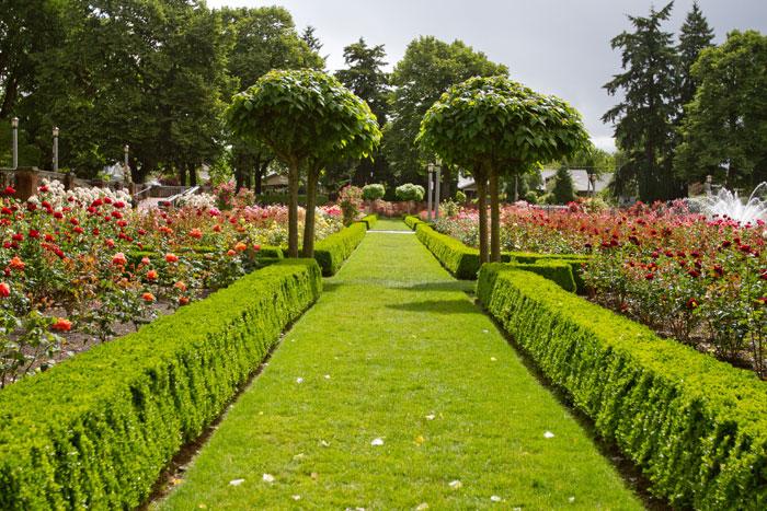 Lush green International rose garden Portland | Truly Hand Picked