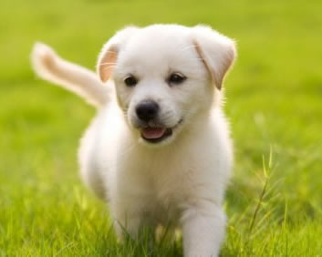 Shall we play puppies pictures