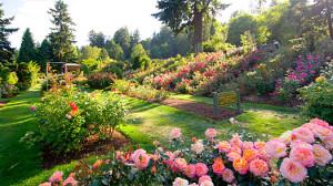 International rose garden Portland