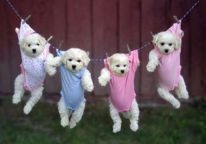 Just hanging around puppies pictures