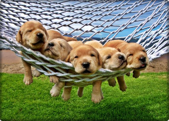 Feeling lazy is great puppies pictures