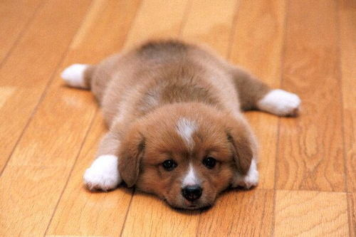 its nap time puppies pictures