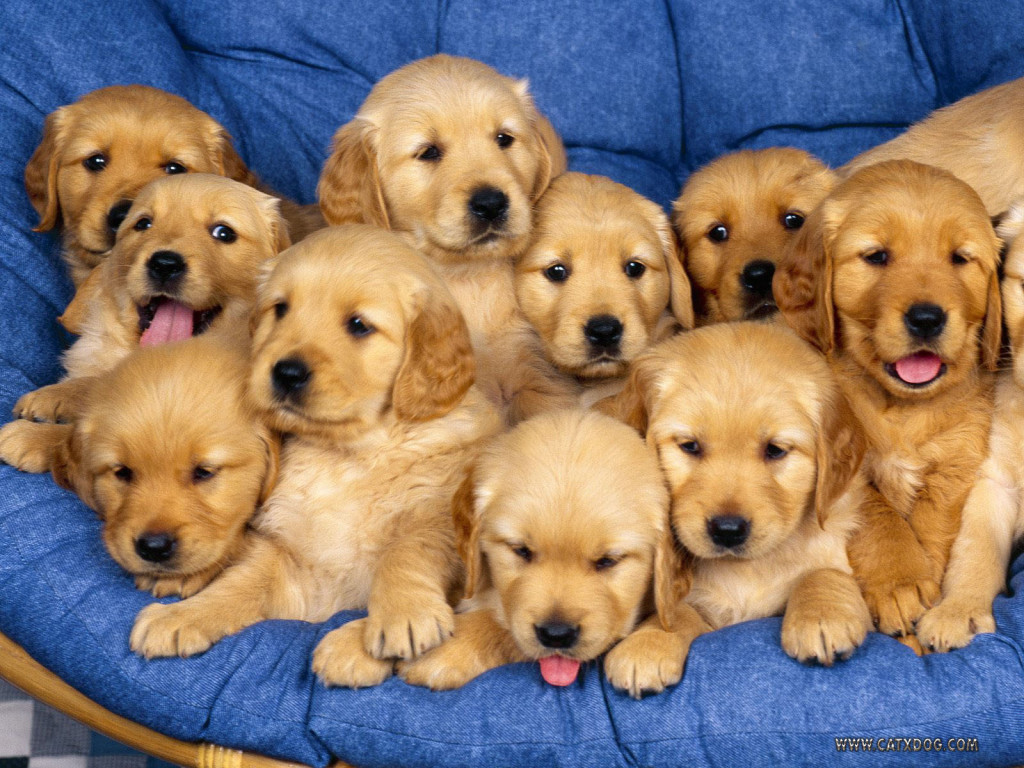 Cute and sweet puppies on a chair puppies pictures