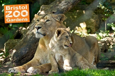 Things to do in Bristol Zoo United Kingdom