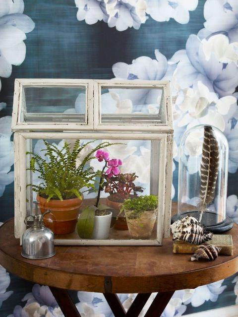 4 BudgetFriendly Mini Picture Frame Terrarium cum Greenhouse