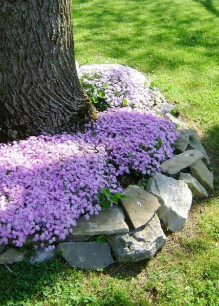 8 Colorful Bushy Flowering Plant Garden Edging around the Tree with Some Natural Stones