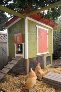 10 DIY Inexpensive Chicken Coop with Raised Cube