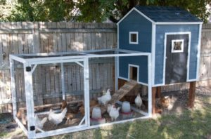 4 Ideal Diy Chicken Coop Project for Open Backyard Farm