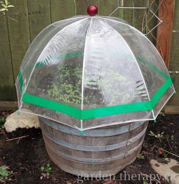 2 Simple Umbrella Shape Green House over Rustic Plant Bucket