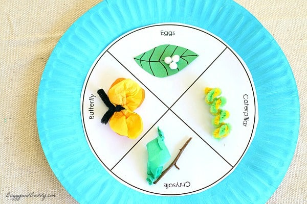 Paper Plate Project Idea: Butterfly Life Cycle