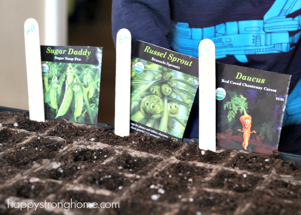 DIY Gardening: Growing Plant STEM Activity for Toddlers