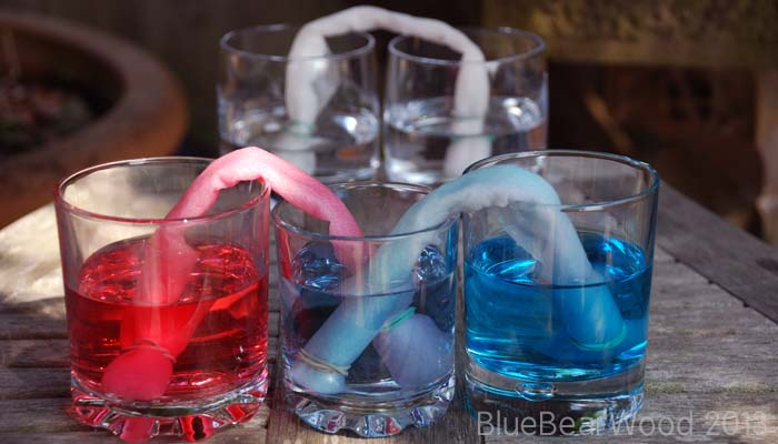 Water Movement STEM Experiment: Water Moves Capillary Action