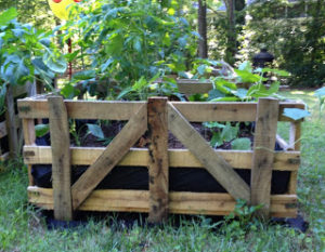 A Thriving Garden Plant View with Large Pallet Crate Raised Garden Bed in No-Paint Rustic Look