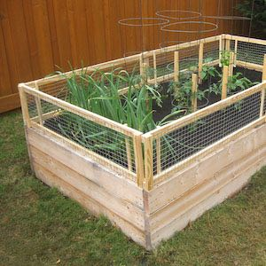 Budget-Friendly Wooden Raised Garden Planter with Removable Pest Gate of Wires