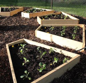 Pretty DIY Raised Medicinal Wheel Garden Idea with Fresh Lumber Boards