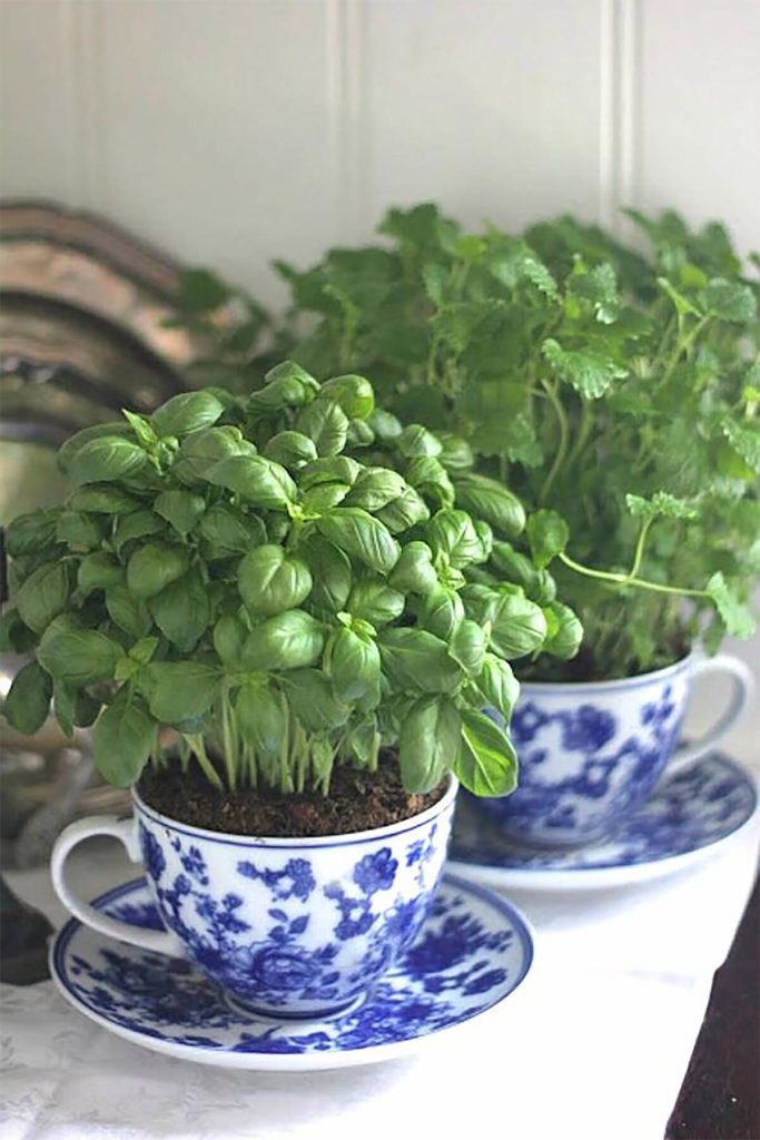 Tea Cup Mini Herb Garden: DIY Cup and Saucer Planters for An Indoor Herb Gardening