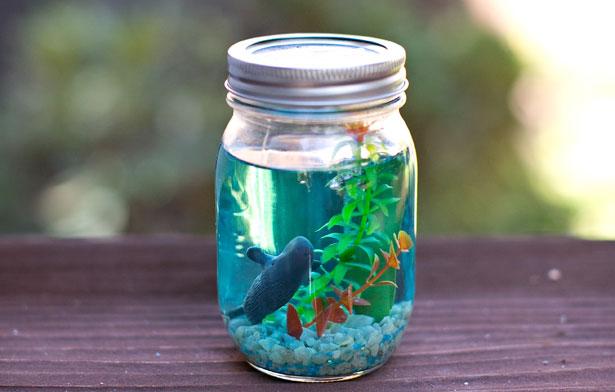 DIY Fascinating Summer Craft Idea for Nature Lovers: Spectacular Mason Jar Aquarium