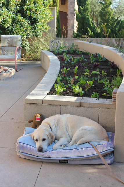 DIY Concrete Vegetable Garden Raised Planter with Concrete Blocks By Laguna Dirt