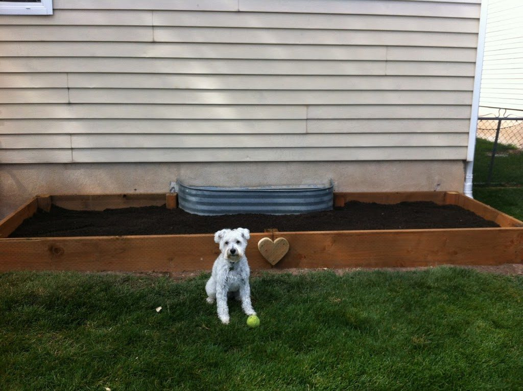 DIY Raised Garden Bed Project with Wooden Frames By Fry Sauce and Grits
