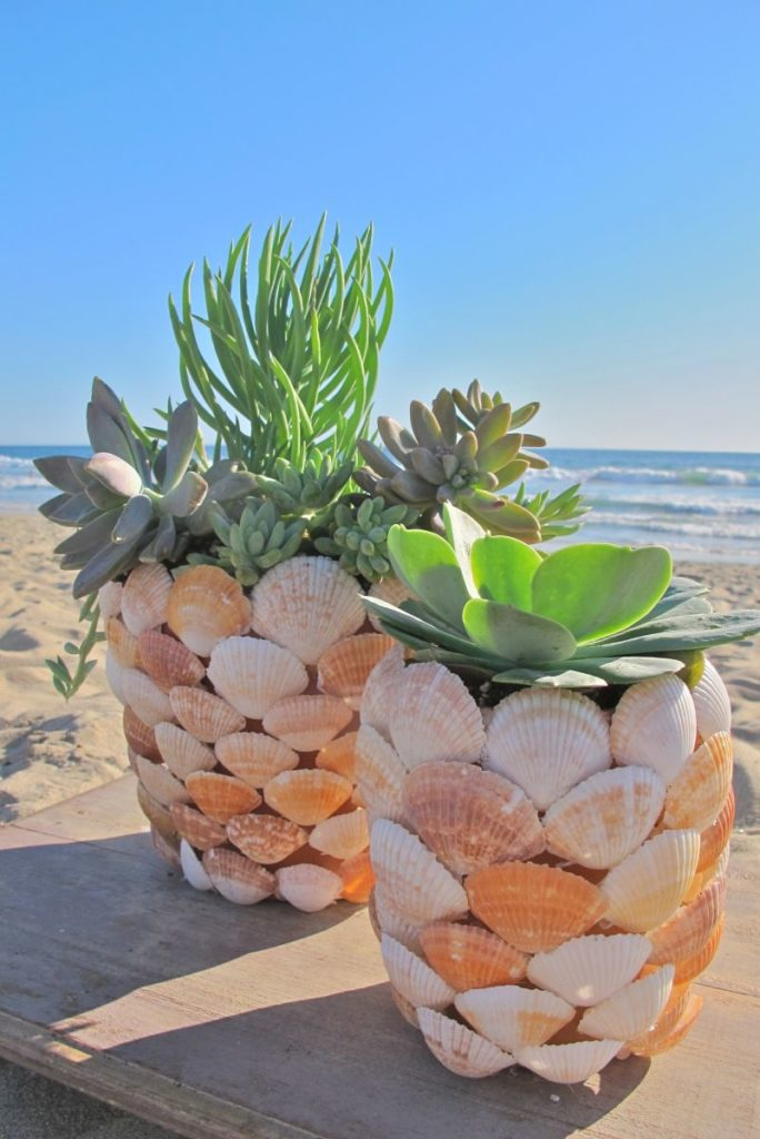 DIY Seashell Planter: Exclusively Made Rustic Plater for Succulents with large Seashells