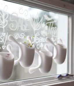Amazingly Trendy Sticky Window Planter for Indoor Herb Gardening
