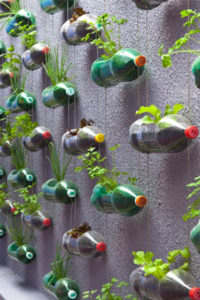 Wide Vertical Herb Gardening Idea with Plastic Pop Bottles: A DIY Indoor Hanging Garden Idea