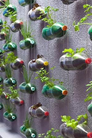 Wide Vertical Herb Gardening Idea with Plastic Pop Bottles: A DIY Indoor Hanging Garden Idea