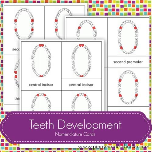 FREE Teeth Development Nomenclature Cards: DIY Dental Craft Idea By The Pinay Homeschooler