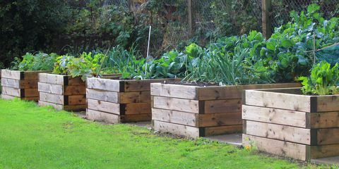 Raised Bed Instructions with Rustic Old Pallets: A Cheap DIY Garden Project