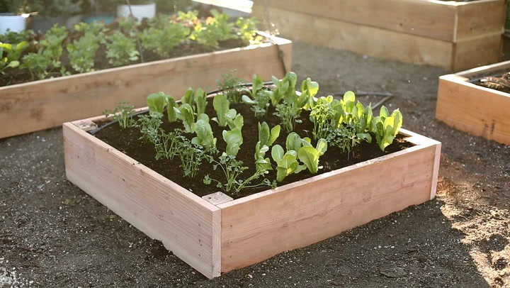 Spectacularly Made Raised Garden Bed Tutorial with Clear Video Instruction By Sunset Magazine