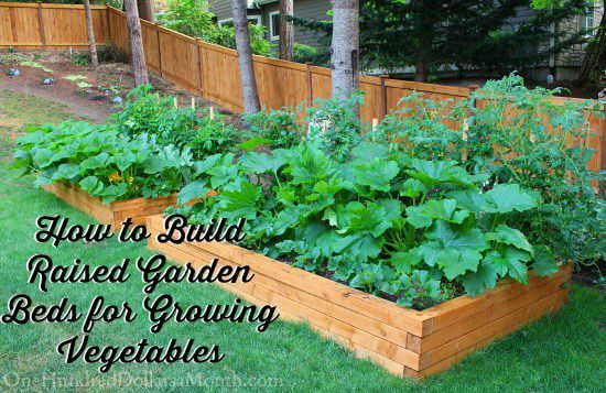 Easy Tutorial of How to Build Raised Garden Beds for Growing Vegetables