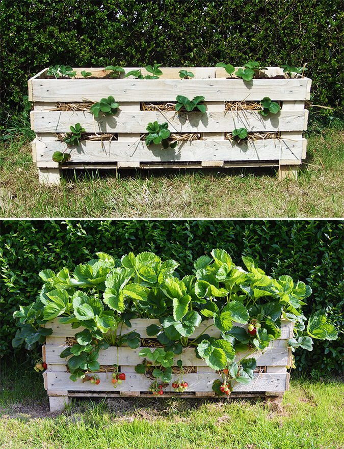 How to Make a Super Rustic Strawberry Pallet Planter By Lovely Greens