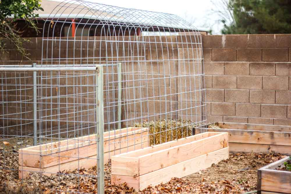 A Highly Functional Raised Planter Combo with Raised Bed Box and Elevated Trellis
