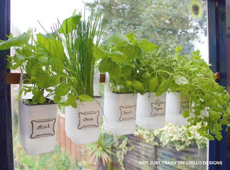 Indoor Bottle Herb Garden – From Recycled Milk Bottles with Clear Tags